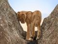 506MeliaSerengetiLodge-Photographic_Safari_zone