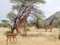 507MeliaSerengetiLodge-Photographic_Safari_zone