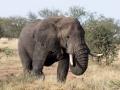 508MeliaSerengetiLodge-Photographic_Safari_zone