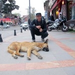"""How I miss Bucharest or The Journey of a Dog's Life"""