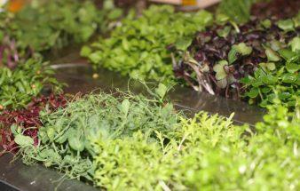 GREEN CHEFS – Respektvoller Umgang in der Gastronomie