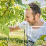 VINEUS Wine Culture Award Bewerbungsphase