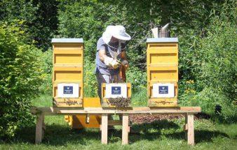 150.000 neue Mitarbeiterinnen – Bienen