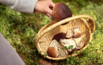 Wild und Pilze aus dem Land der Wälder