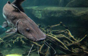 """""""Nose-to-Tail Konzept """" auch beim Fisch"""